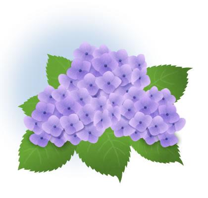 紫陽花 イラスト 紫