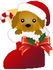 クリスマスブーツ犬 トイプードル