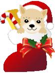 クリスマスブーツ犬 柴犬